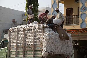 Social, Economic and Environmental Impact Assessment of Cotton Farming in Madhya Pradesh