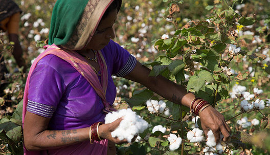 Social and Economic Impact Assessment of Cotton Farming India